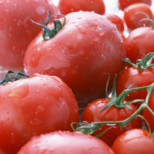 光触媒炭と無農薬野菜